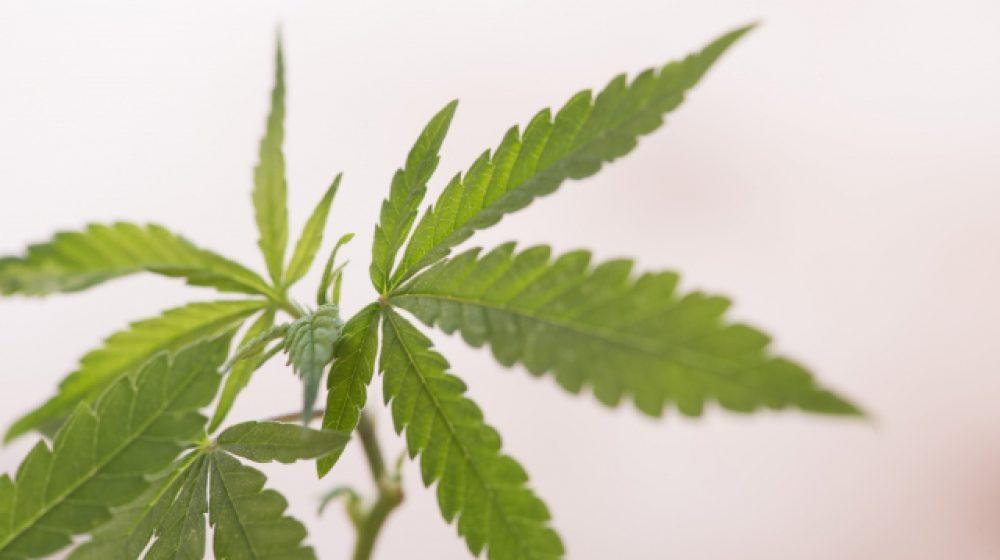 ノンタブリー県に大麻クリニックが開設