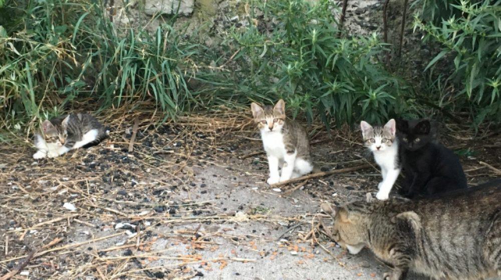 野良猫40匹を餌付け、近隣住民の迷惑に