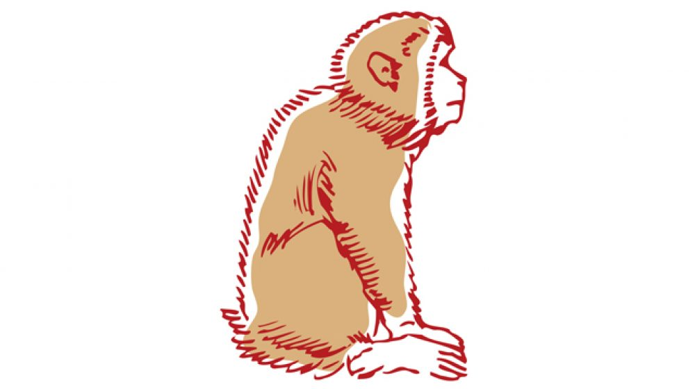 観光地の猿がプラスチック袋で窒息死か