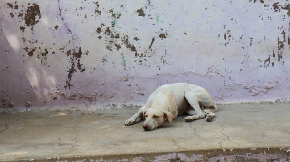 野良猫・犬の保護施設を建設 動物好きの新観光名所に