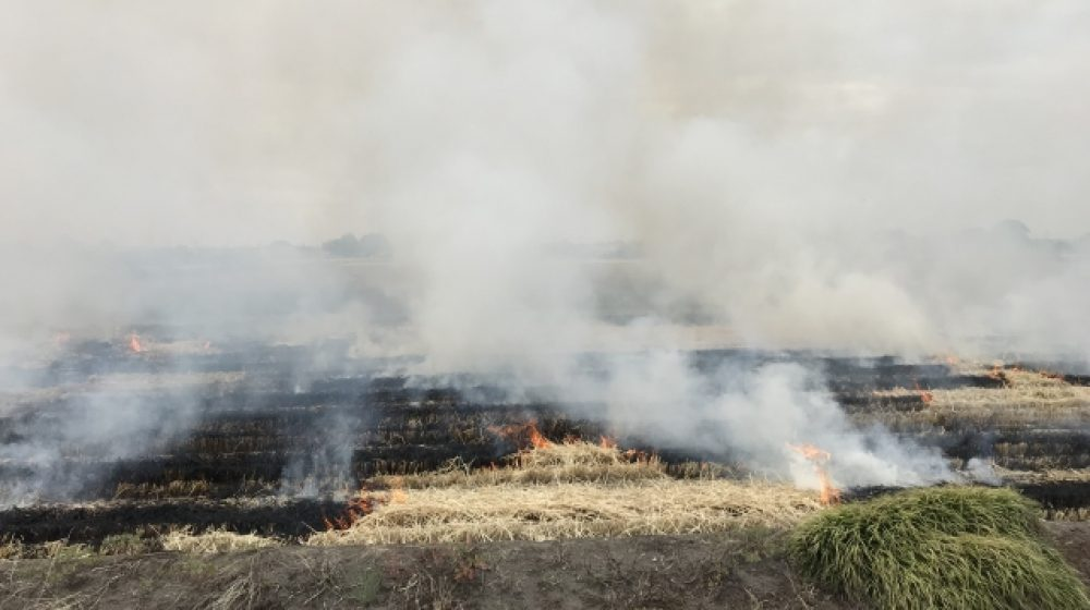 サトウキビ畑の焼き畑に警告 PM2.5の悪化で健康被害も