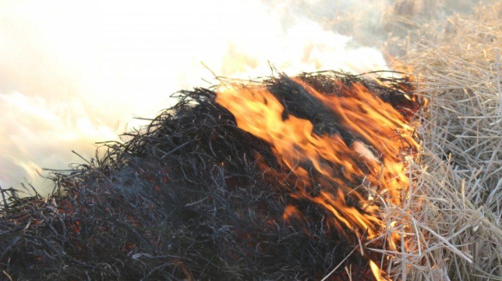 子どもが焼き鳥の火を起こし 畑1万6千㎡が燃える
