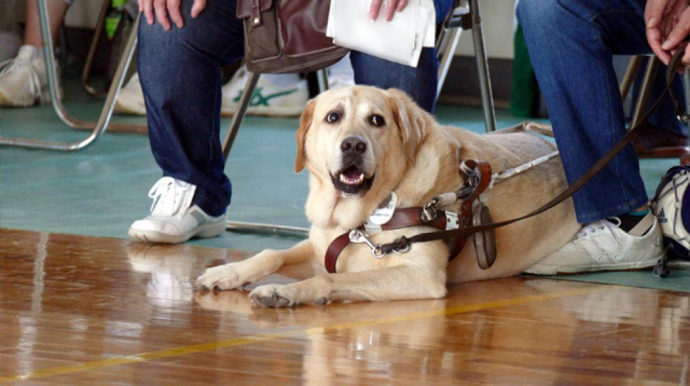 セントラルデパートで盲導犬の入場が可能に